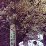 不忍通り沿い千石の一本だけの夜桜